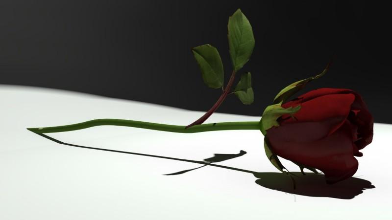 rendering rosa rossa